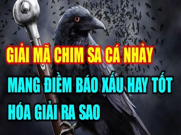 chim-sa-ca-nhay-la-hien-tuong-gi